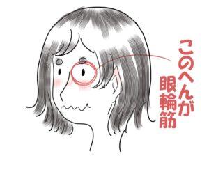 眼輪筋について