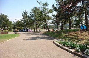 りんくう公園の道